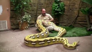 Grandes Serpientes de Jay Brewer /  La Ceja Virtual