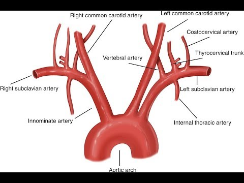 aorta video watch HD videos online without registration