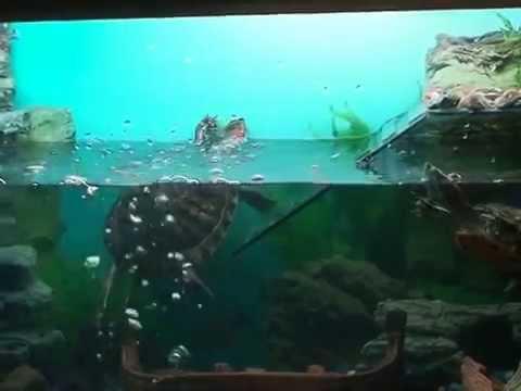 Террариум для красноухой черепахи видео