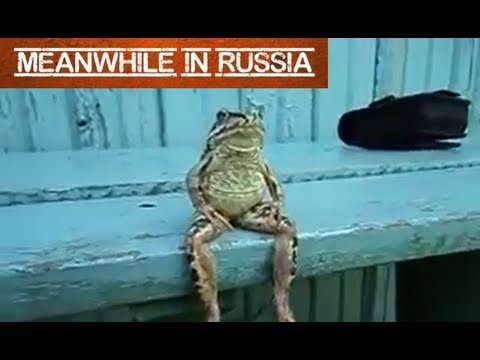 Frog Chilling Like a Human - Youtube