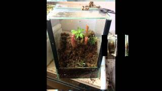 Terrario de plantas carnivoras