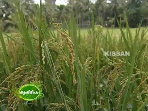 Farming practices of a celebrity farmer Sri. Sathyan Anthikad, film director