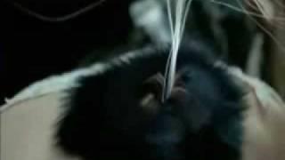 Watch Bjork Komid video