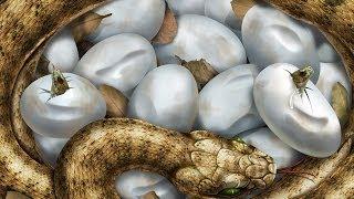 Snake HD 1080p