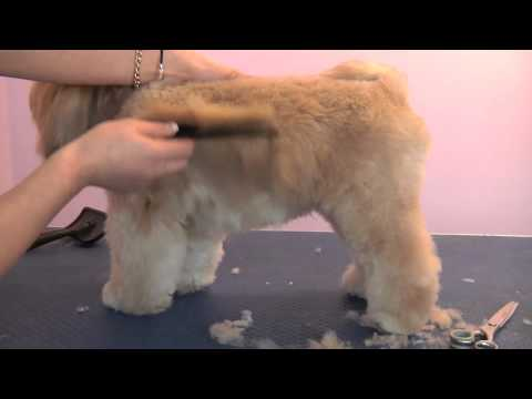 Grooming Guide - Lhasa Apso Pet or Salon Trim - Pro Groomer