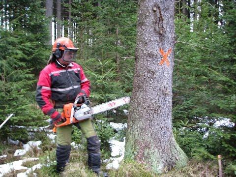 Felling a tree 18
