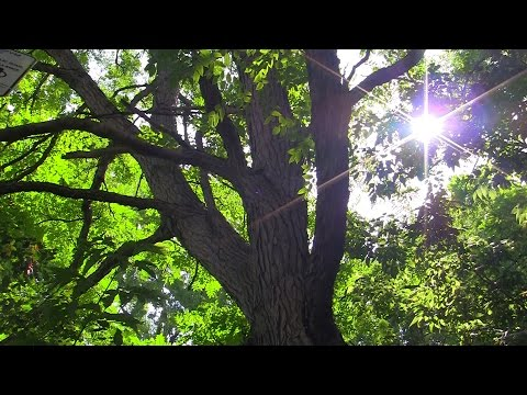 Do you remember this summer? - Urban Woodland Garden, Montreal - Free HD Stock Footage