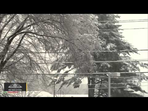Storm Knocks Out Power on Thanksgiving - TOI