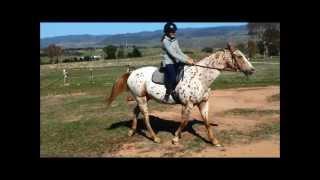 Watch Saddle Club The Sun Is Always Shining video
