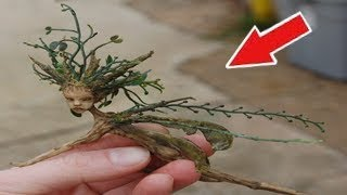 5 REAL FAIRIES CAUGHT ON CAMERA & SPOTTED IN REAL LIFE