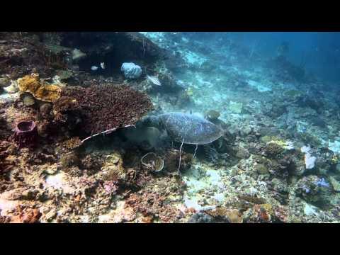 Diving Tunku Abdul Rahman Marine Park, Sabah, Malaysia