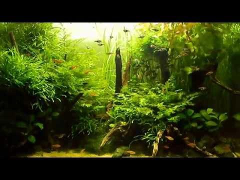 Удо в аквариум своими руками 28