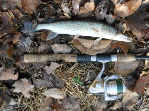 Fishing report - Chain Pickerel: Ambush Strike Video