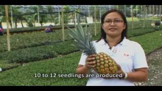 DOLE - Banana and Pineapples Journey From Farm to Store
