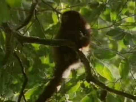Biodiversidad, Selva Tropical.wmv