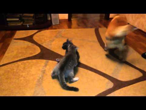 Кошачие разборки. Свежее