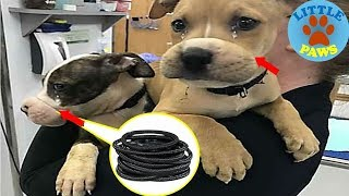 Rescue Puppies With Their Mouths Wrapped Shut With Rubber Bands  Were So Happy To See Rescuers