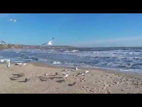 Море осенью . Море в ноябре . Кормим чаек . Черное море осенью