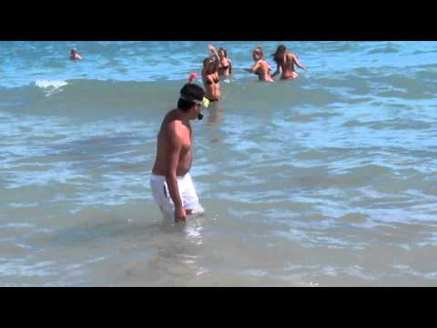 La goffaggine – animali marini giganti