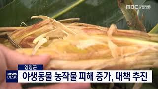 양양, 야생동물 농작물 피해 60% 증가