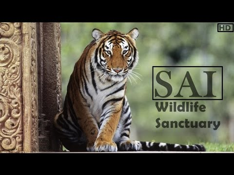 SAI Sanctuary - The only Private Wildlife Sanctuary in India - HD