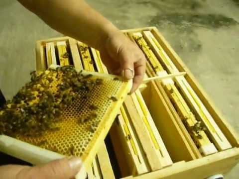 Etykieta du17ca - mi0f3d gryczany -100szt - r0f317cne wzory - sklep pszczelarski: miodarki, ule, wszystko dla pszczelarstwa