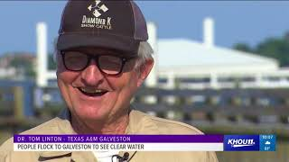 : Clear blue water in Galveston?