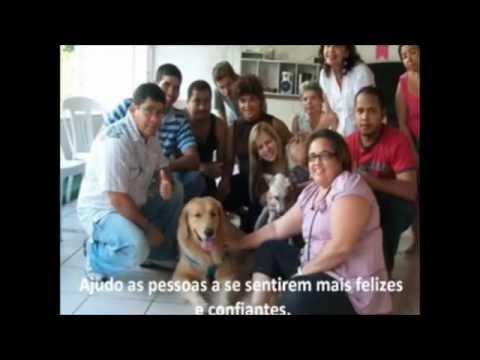 Veterinário coloca parafusos de uso comum em coluna de cão