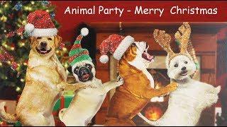 Funny Christmas Dog Video
