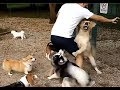 Brave Owners Protecting Their Dogs!!! MP3