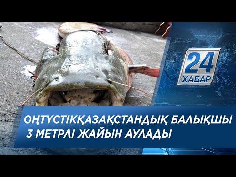 Оңтүстікқазақстандық балықшы 3 метрлі жайын аулады