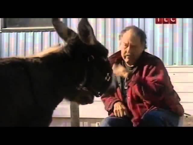 Зоофилия! смотреть видео онлайн просмотр зоофилия девочки с животными zoofi