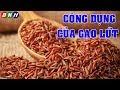 Công Dụng Của Gạo Lứt: Gạo Lứt Có Nhiều Tác Dụng Chữa Bệnh Mà Bạn Không Thể Bỏ Qua - Ngọc Hân Bùi