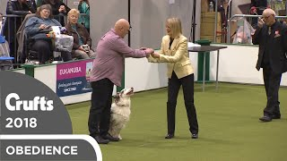 Obedience - Dog Championship Scents | Crufts 2018