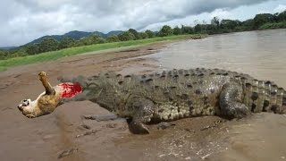 CRAZIEST Animal attacks Caught On Camera #2 - Most Amazing Wild Animal Attacks