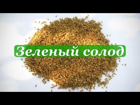 Проращивание зерна, приготовление солода в домашних условиях