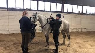 D-ponny valack - 13