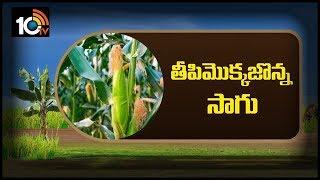 తీపి మొక్కజొన్న సాగు... | Sweet Corn Farming Methods | Matti Manishi