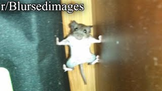 r/Blursedimages | THIS RAT,,.. WILL GIVE YOU CHILLS