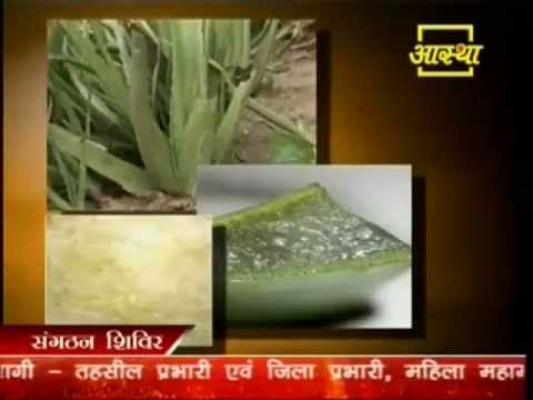 Medical Use of Alovera Part-2-Pujya Acharya Balkrishn