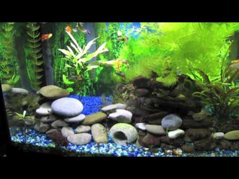 Ultimate Community Fishtank (180 Gallon) - Sharks, Guppies, Shrimp,Tiger Barbes, Clown Loach