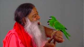 Parrots interact with Sri Swamiji at Shukavana (Parrot Park)