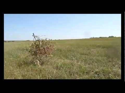 Растеряев Игорь - Веселей
