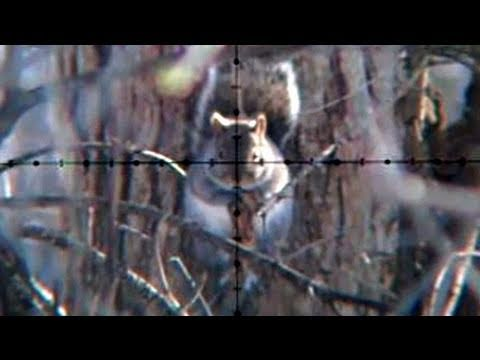 Air Rifle Squirrel Hunting Slow-Motion (Jan 21. 2011)