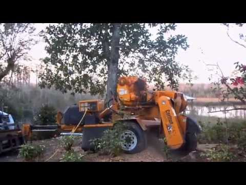 Taylor Tree Co. Stump Grinding on Bayou, Kiln MS