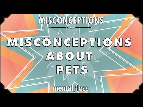 Misconceptions about Pets - mental_floss on YouTube (Ep.6)