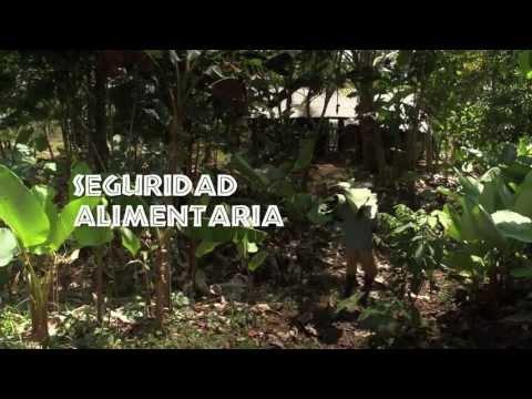 Historias afrocolombianas sobre plantas comestibles