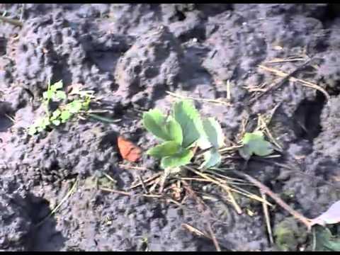 Bodenbearbeitung In Meinem Gemüsegarten Www.maxgreen.de