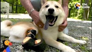 Dog Who Lost Legs in Puppy Mill Finds PERFECT Dad: Comeback Kids TRAILER  | The Dodo