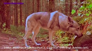 """The Wolfdog`s Dream"" Chapter 2: ""An Almost Normal Day"" - MusicMovie HD"